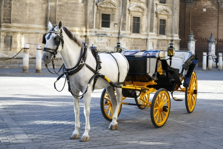 In front of the Cathedral. White horse and traditional tourist carriage in Sevilla photo