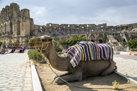 Roman amphitheater of El-Jam, colosseum, Tunisia, with closeup of dromedary photo