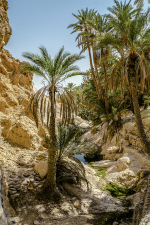mountain oasis: view of mountain oasis Chebika, Sahara desert, Tunisia, Africa