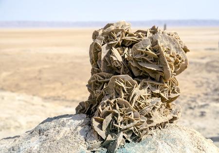 tunez rose desert, salt lakes tunez with desert background. photo