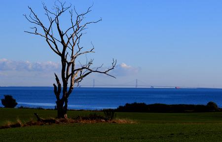 Dead tree Reklamní fotografie