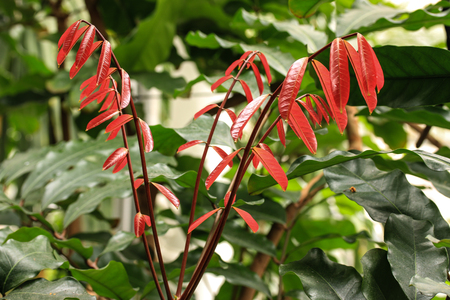 dubium: Tropical flower Stock Photo