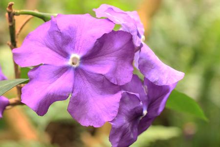 ornithogalum: Tropical flower Stock Photo