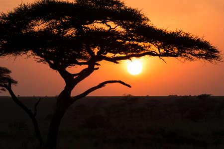 naranja arbol: Silueta de un �rbol en la salida del sol, un disparo durante un safari en el Parque Nacional del Serengeti, Tanzania Foto de archivo
