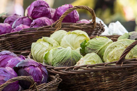 green and purple vegetables: Fresh organic vegetables - Pile of green and purple cabbages in baskets at farmer