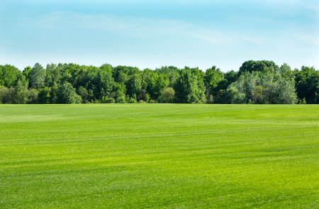 Green field with a lawn grass, trees and sky on a horizon