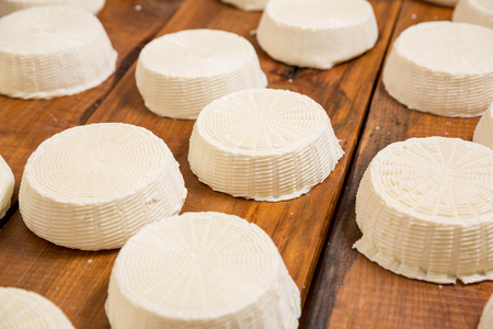 Salty goat cheese heads on a wooden shelf in a cellar on a private farm. Cheese manufacture