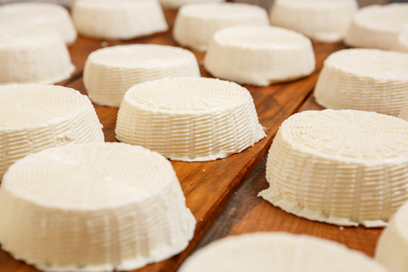 animal private: Salty goat cheese heads on a wooden shelf in a cellar on a private farm. Cheese manufacture