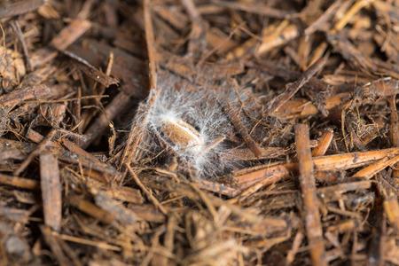 Crop seed with mushroom spores and newborn mycellium threads Фото со стока