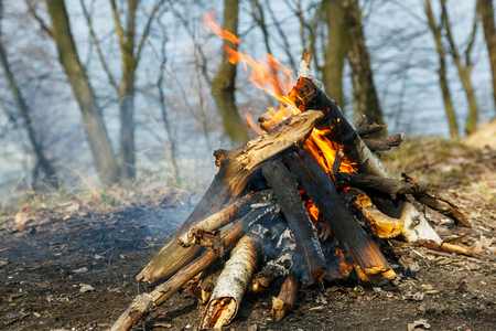 Classic camping campfire on open ground in a spring forest. Natural wood Stock Photo