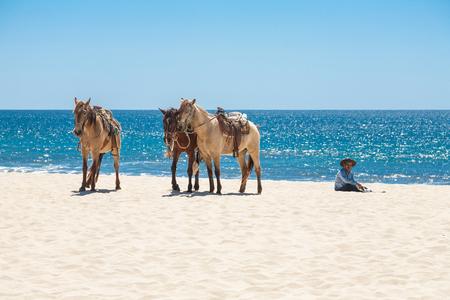 SAN JOSE DEL CABO , MEXICO -MARCH 22, 2012 :  Three horses and mexican vaquero on a beach of San Jose del Cabo, Los Cabos , Mexico Editorial