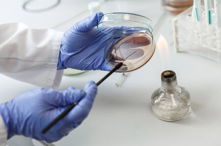 Laboratory assistant analyzes bacterium sample using medical equipment in a bacteriology clinic. Microbiological medical concept Фото со стока