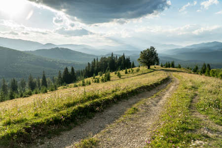 Lonely tree and dirt road in a carpathian mountains under the stormy sky somewhere in Ukraine. Summer view
