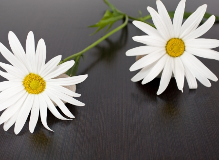 daisys: daisys with wenge background
