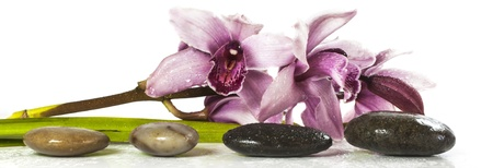 orchid and stones on white background photo