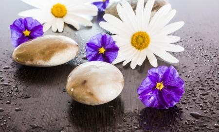 wengue: las flores y las piedras en el fondo wengu� h�meda