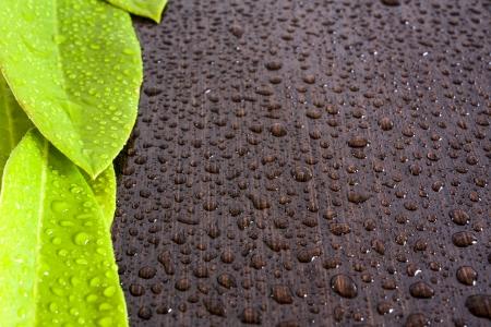 wengue: hojas en fondo negro h�meda madera de wengu�