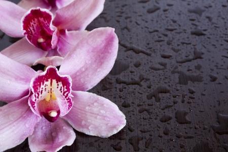 wengue: orqu�deas mojadas en el fondo wengu�
