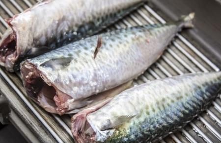 mackerel on the grill photo
