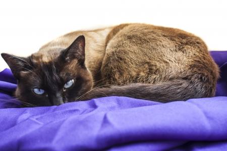 intelligently: cat sleeping on blue cloth