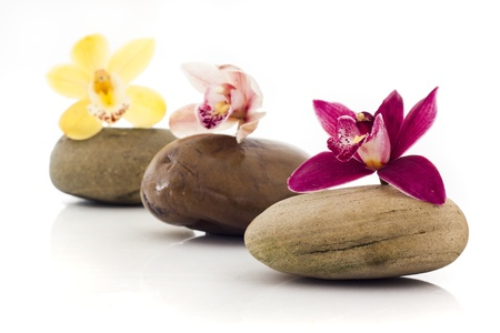 stones and orchids isolated on white