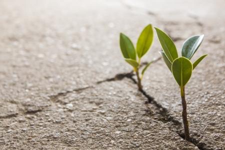 hoopt: onkruid groeit door barst in bestrating