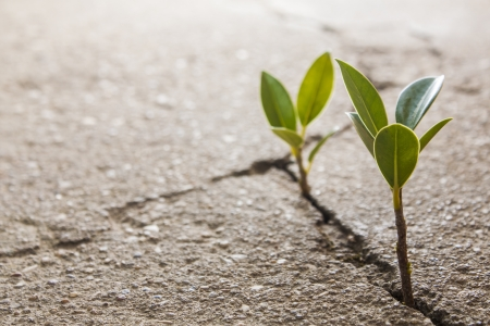 weed growing through crack in pavement Stock Photo