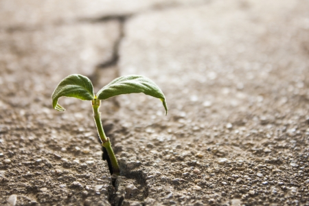 cracked cement: weed growing through crack in pavement Stock Photo