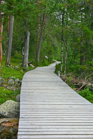 going nowhere: Wooden path in the forest, going nowhere
