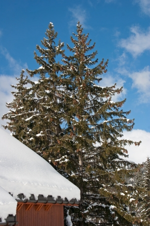 Chalet covered with snow with pine tree in the French Alps photo