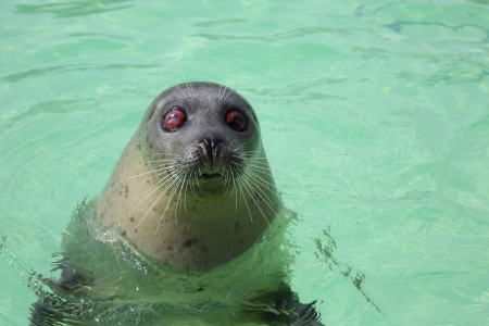 A blind seal in the Ecomare Bassin in Texel photo