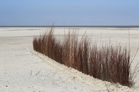 デ カクスドルプ - テクセルのビーチでブラウン草 写真素材 - 27537781