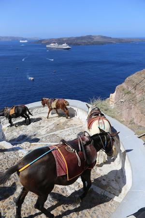 fira: Donkeys on the climb from the harbor in Fira,Santorini, Greece Stock Photo