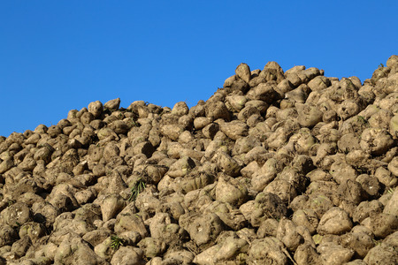 agronomical: Pile of sugar beets on a field Stock Photo