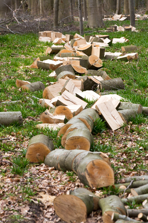 Pile of wood in the forest 写真素材