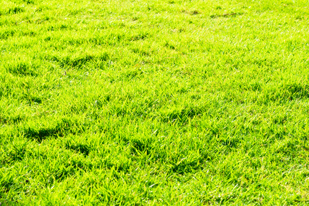 Green field of grass background Stock Photo