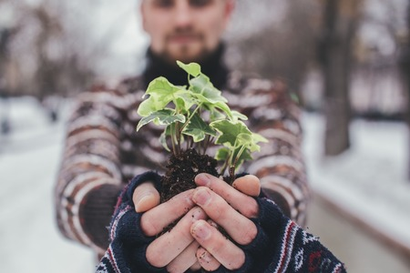 help section: plant in a hand at winter