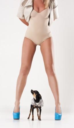 Beautiful woman legs in studio. small dog photo