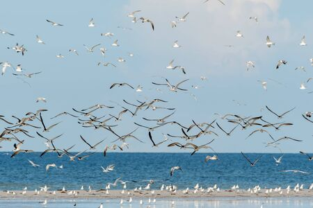 Florida beach with flocks of shore birds on land and flying