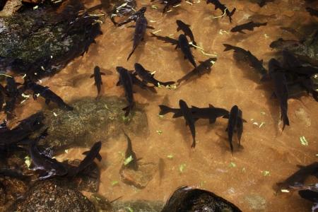 Plong-Hin Fish , Thailand Stock Photo - 18811983