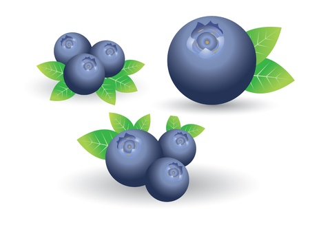 blueberries: blueberry