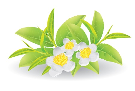 Flower and leaves of green tea
