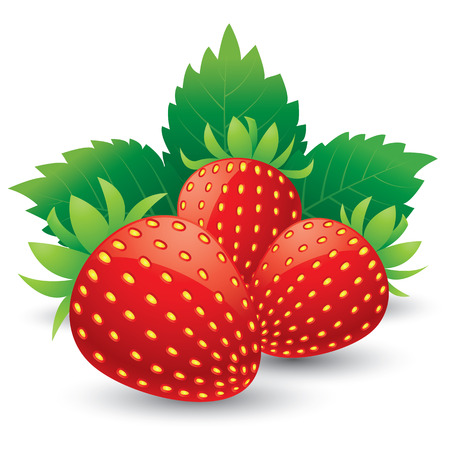three leaf: Strawberries with leaves  Isolated on a white background  vector illustration