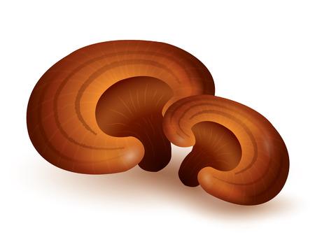 Lingzhi Mushroom  isolated on white background. vector illustration