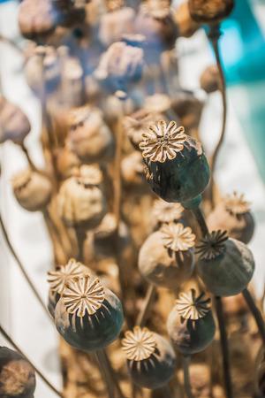 indigenous medicine: Closeup dry opium