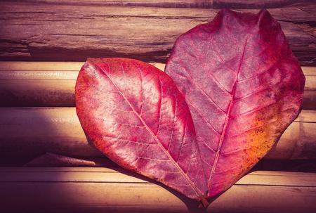 leaf shape: Autumn leaf in heart shape on a wood background. Pink vintage style. Love nature concept