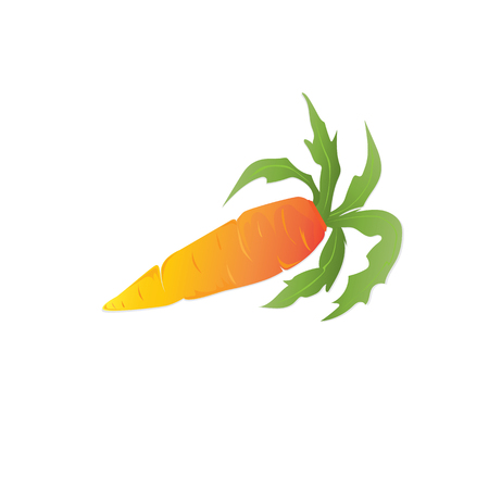 Carrots are orange with leaves Stock Photo