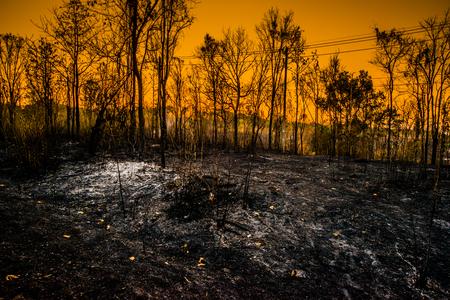 Staat van het bos in de moessonzone Na het bosbrand Strenge brand Vuur heeft alles vernietigd Alleen nog verschroeide bomen en as.