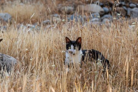 adult domestic cat lying in dried plants. suitable for animal, pet and wildlife themes Banco de Imagens