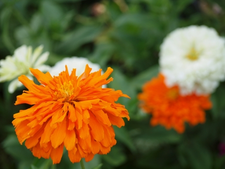 Orange Und Weiße Blumen Lizenzfreie Fotos, Bilder Und Stock ...